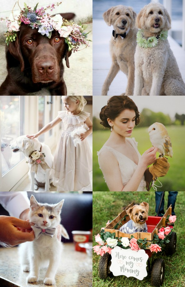 Wedding Animals 1