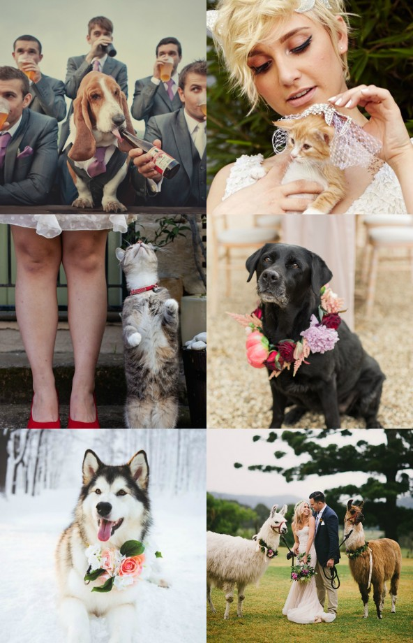 Wedding Animals 2