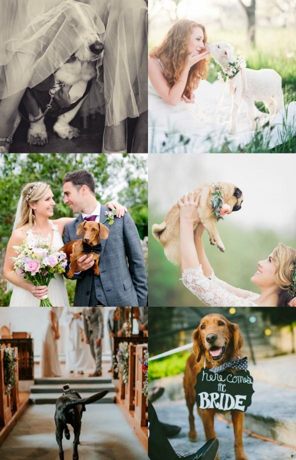 Wedding Animals 3