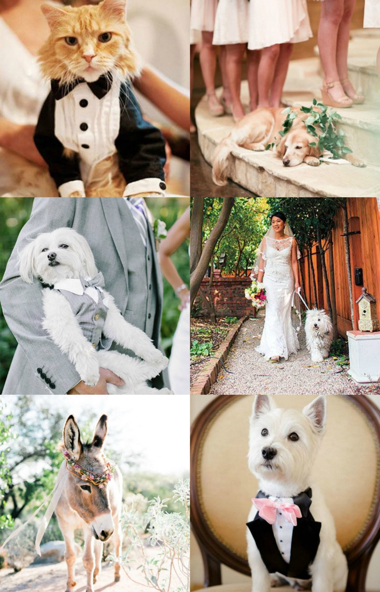 Pets at weddings