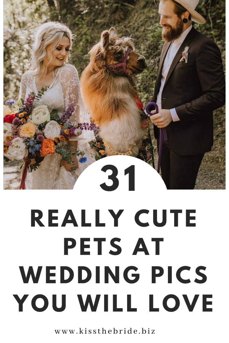 Pets at weddings ideas